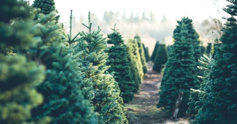 unwanted-christmas-tree